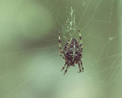 Photograph - European Garden Spider D by Jacek Wojnarowski