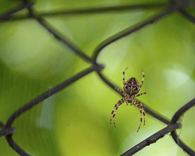 Photograph - European Garden Spider J by Jacek Wojnarowski