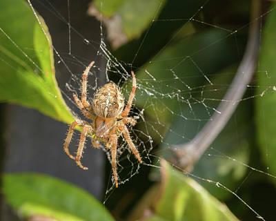 Photograph - European Garden Spider K by Jacek Wojnarowski