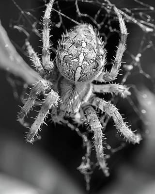 Photograph - European Garden Spider M by Jacek Wojnarowski