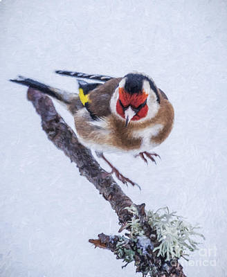Digital Art - European Goldfinch Carduelis Carduelis Taking Off From Twig by Liz Leyden