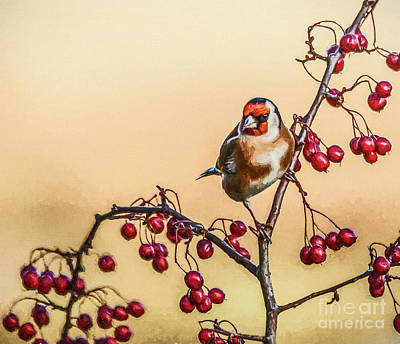 Digital Art - European Goldfinch With Berries by Liz Leyden