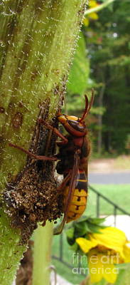 Beaches And Waves Rights Managed Images - European Hornet Royalty-Free Image by Joshua Bales
