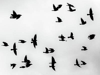 Photograph - European Jackdaws Silhouette by Ismo Raisanen