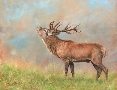 Red Deer Painting - European Red Deer by David Stribbling