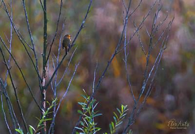 Photograph - European Robin, Erithacus Rubecula, Redbreast, Geneva, Switzerla by Elenarts - Elena Duvernay photo