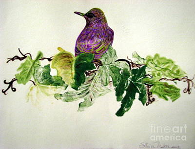 Starlings Mixed Media - European Starling On Ivy by Sharon Nelson