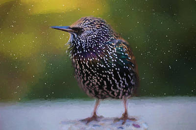 Painting - European Starling - Painted by Ericamaxine Price