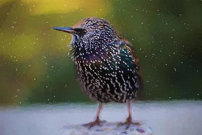Starlings Painting - European Starling - Painted by Ericamaxine Price