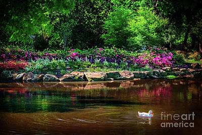 Photograph - Eutopia At The Muskogee Azalea Festival by Tamyra Ayles