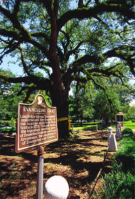 Acadian Photograph - Evangeline Oak St Martinville Louisiana by Thomas R Fletcher