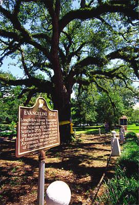 Evangeline Photograph - Evangeline Oak St Martinville Louisiana by Thomas R Fletcher