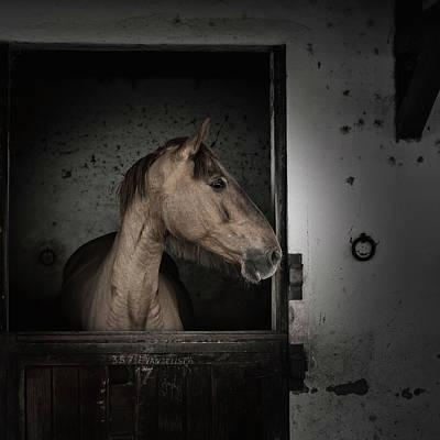 Photograph - Evangelista by Edgar Laureano