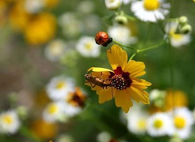 Photograph - Even Lightening Bugs Gotta Eat by David Dunham