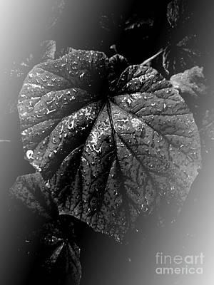 Photograph - Even The Darkest Heart by Rachel Hannah
