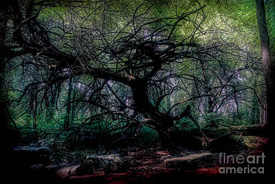 Photograph - Evening Angel Oak by Luther Fine Art