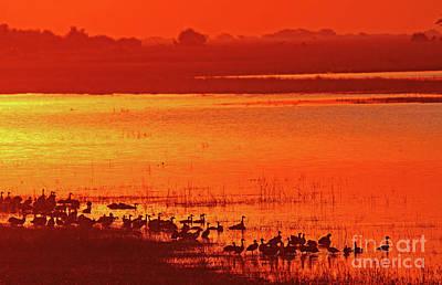 Photograph - Evening At Chobe River, Botswana by Wibke W