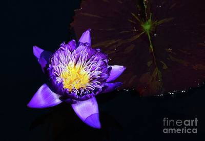 Photograph - Evening At The Water Lily Pond by Cindy Manero