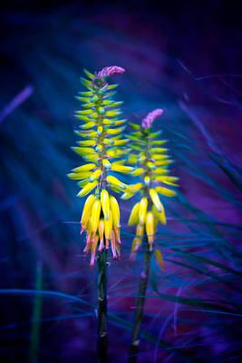 Alligator Photograph - Aloe Flowers by Mark Andrew Thomas