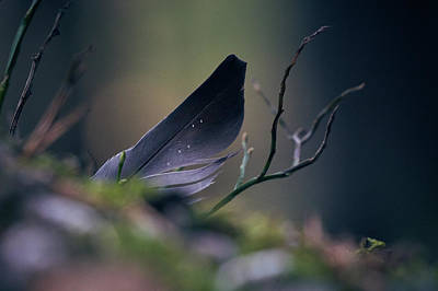 Photograph - Forest Feather by Andreas Gerden
