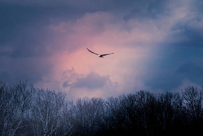 Photograph - Evening Flight by Allin Sorenson