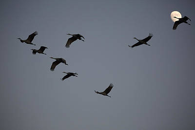 Photograph - Evening Flight by Jean Clark