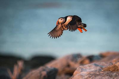 Photograph - Evening Flight by Paul Treseler