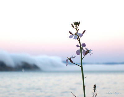 Sausalito Photograph - Evening Fog Rolling In by Sabine Stetson