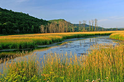 Golden Marsh Photograph - Evening Gold by Bill Morgenstern