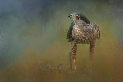 The Shins Photograph - Evening Hawk by Jai Johnson