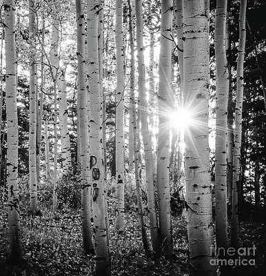 Art Print featuring the photograph Evening In An Aspen Woods Bw by The Forests Edge Photography - Diane Sandoval