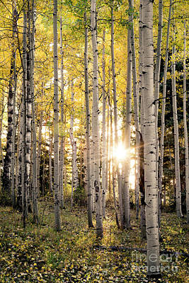Evening In An Aspen Woods Vertical Art Print