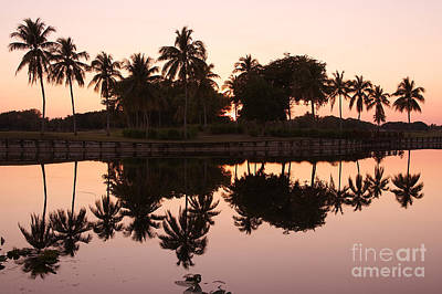 Photograph - Evening In Pink by Lorenzo Cassina