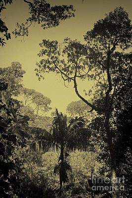 Photograph - Evening In The Jungle by Rudi Prott
