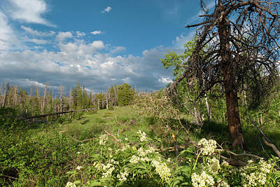 Photograph - Evening Landscape On The Slopes Of Ute Peak by Cascade Colors