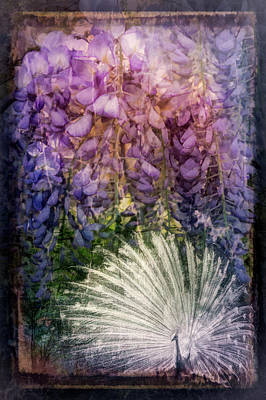 Photograph - Evening Lavenders by Debra and Dave Vanderlaan