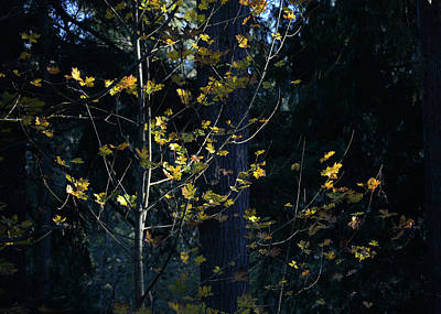 Photograph - Evening Light In November by Ronda Broatch
