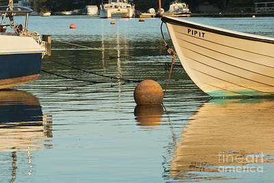 Photograph - Evening Light On Pipit by Terri Waters