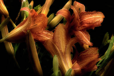 Photograph - Evening Lilies by Mike Eingle