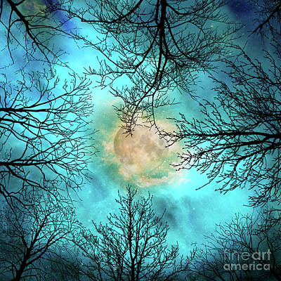 Evening, Looking Up At Bare Trees, The Moon And Starry Sky Art Print