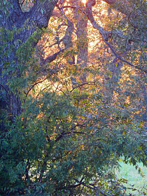 Photograph - Evening Magic by Virginia Kay White