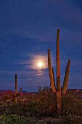 Photograph - Evening Meditations by Rick Furmanek