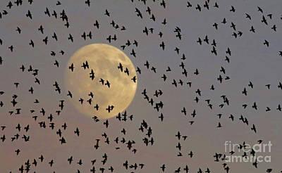 Photograph - Evening Migration by Debbie Parker