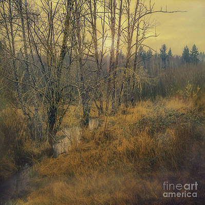 Photograph - Evening Mist by Jean OKeeffe Macro Abundance Art