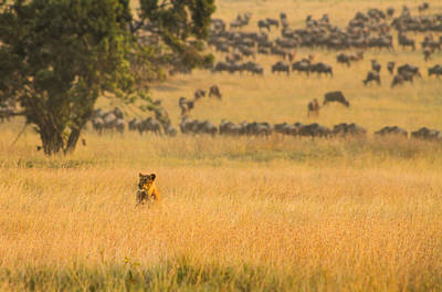 Mauverneen Blevins Photograph - Evening On The Mara by Mauverneen Blevins