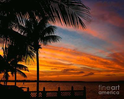 Photograph - Evening Palm Sky by Nancy Yuskaitis
