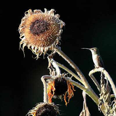 Photograph - Evening Perch by Steve McKinzie