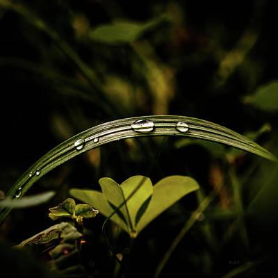 Photograph - Evening Rain Drops by Bob Orsillo