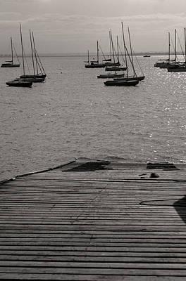 Photograph - Evening Rest by Jez C Self