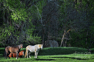 Photograph - Evening Rest by Randy Rogers